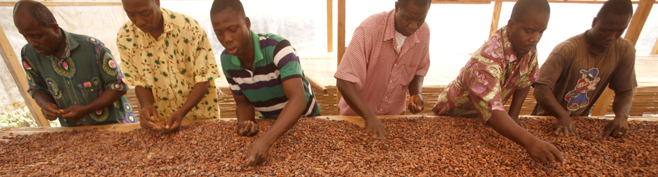 Sorting through beans